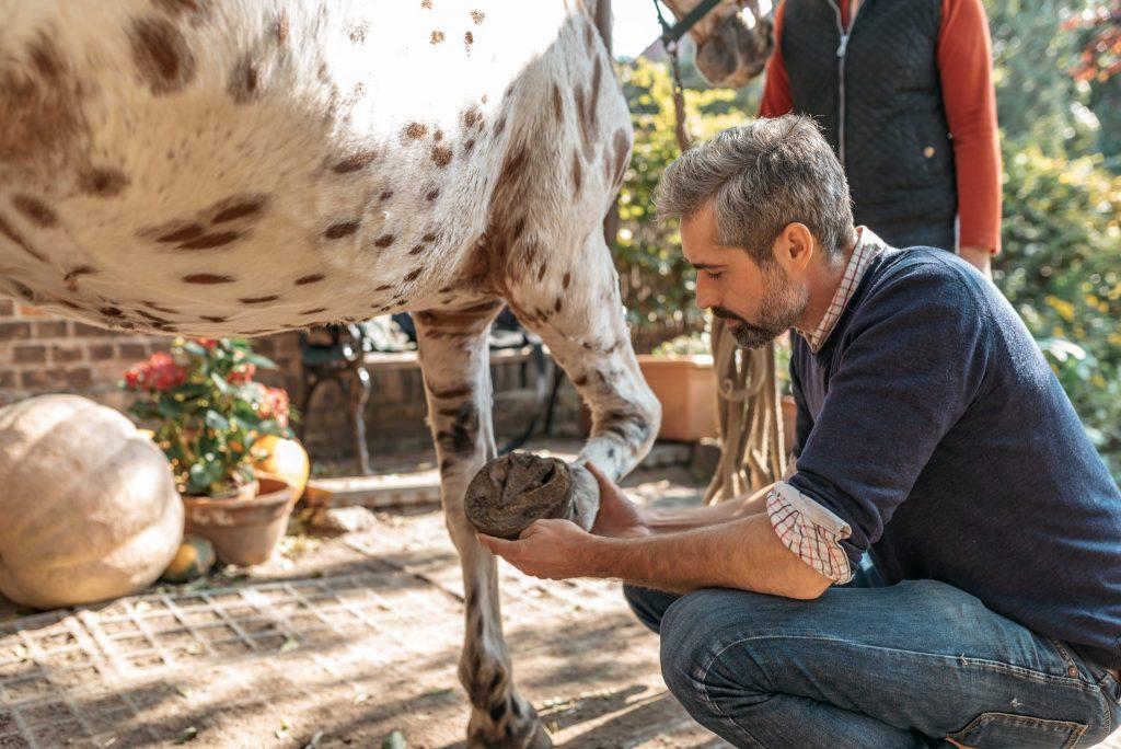 Osteotherapeut untersucht Pferdehuf