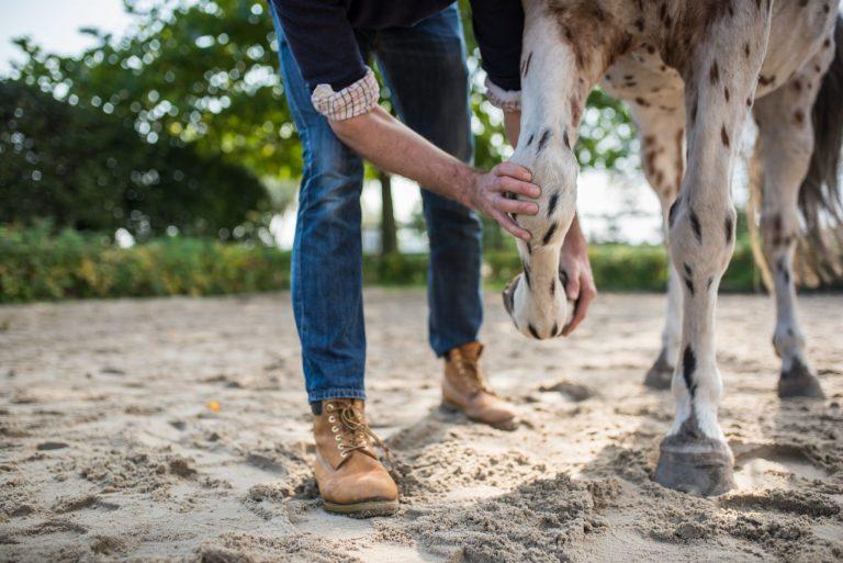 Pferdeosteotherapeutische Untersuchung des Carpalgelenks