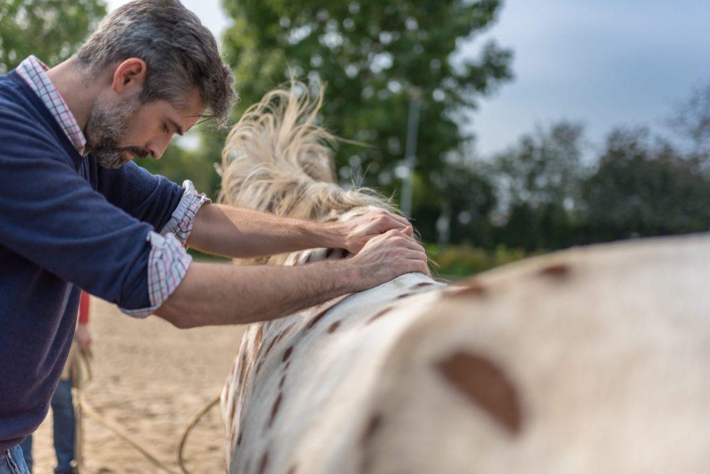 Pferdeosteotherapeut untersucht Wiederist